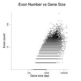 Exon Count vs Gene Size